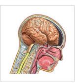 brainimagehomepage